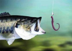 Fish worm