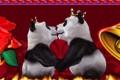 Kissing panda bears