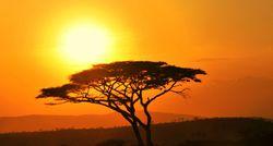 South Sudan landscape